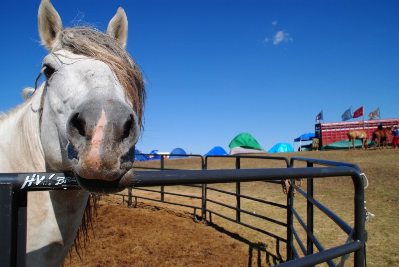 Horse in corral at Big Camp